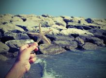 Hand holding big starfish close to the sea cliff in summer Royalty Free Stock Images