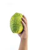 Hand holding big Thai green lemon isolated on white Royalty Free Stock Image