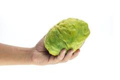 Hand holding big Thai green lemon isolated on white Royalty Free Stock Photography