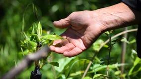 Planting tree shrub