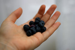 Hand holding blueberries Royalty Free Stock Photos