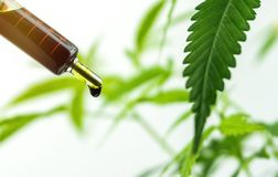Hand holding bottle of Cannabis oil in dropper against cannabis plant stock images