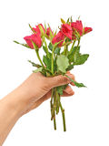 Hand holding a bouquet of red roses Royalty Free Stock Photo
