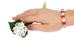 Hand holding a bouquet of snow drops Royalty Free Stock Images