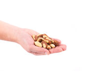 Hand holding brazil nuts. Stock Photos