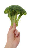 Hand holding Broccoli stock photography