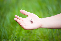 Hand holding a bug Stock Photography