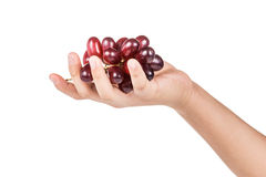 Hand holding of bunch of crimson red grapes Stock Photos