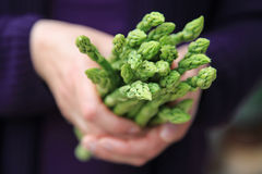 Hand holding a bunch of green asparagus Royalty Free Stock Photography