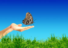 Hand holding a butterfly. Royalty Free Stock Photo