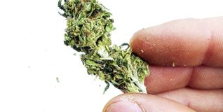 Hand Holding Cannabis, Medical Marijuana Stock Photography