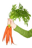 Hand holding carrots Stock Photos