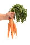 Hand holding carrots Royalty Free Stock Photos