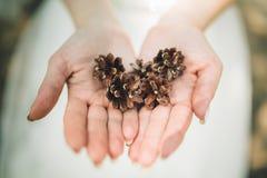 hand holding cedar cone Stock Photos