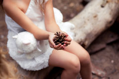 Hand holding cedar cone Stock Image
