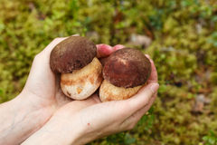 Hand holding ceps Royalty Free Stock Photo