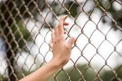 Hand holding, chain link fence Stock Photos