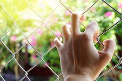 Hand holding on chain link fence over sunny light,motivation or freedom concept Royalty Free Stock Photos