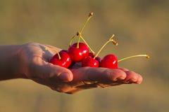 Free Hand Holding Cherries Stock Photo - 33369840