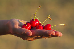 Hand holding cherries Stock Photo