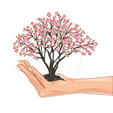 Hand holding a cherry tree blossom Royalty Free Stock Images