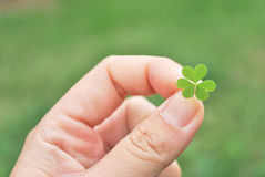 Hand holding clover leaf background Stock Photography