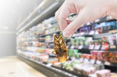 Hand holding cockroach in the supermarket. Eliminate cockroach in shopping mall Royalty Free Stock Image