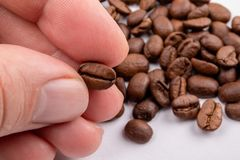 Hand holding a coffee bean between the fingers royalty free stock photos
