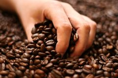 Hand holding coffee beans Royalty Free Stock Photo