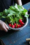 Hand holding colander with radish. Organic food Royalty Free Stock Photo