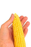 Hand holding a corn Stock Image