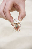 Hand holding crab Royalty Free Stock Images