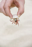 Hand holding crab Stock Image