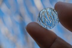 Hand holding crystal ball with reflection of winter tree and blu. E sky Stock Photography