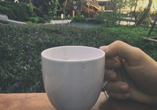 Hand holding cup of coffee in garden Stock Image