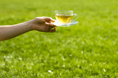 Hand holding cup of tea on sunny day. Detail of a woman's hand holding a cup of tea Royalty Free Stock Images