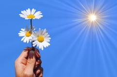 Hand holding a daisy Royalty Free Stock Images