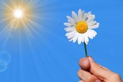 Hand holding a daisy Stock Photos
