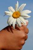 Hand Holding a Daisy Stock Images