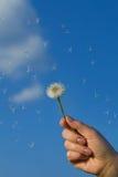 Hand holding dandelion against blue sky Stock Photos