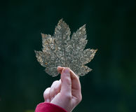 Hand holding decaying leaf. Stock Image