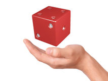 Hand holding dice isolated on white background Stock Image