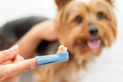 Hand holding dog toothbrush. Royalty Free Stock Photos