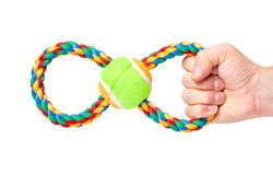Hand with dog toy. Hand holding Dog toy - pet accessories for games, isolated on white background with copy space Royalty Free Stock Photos