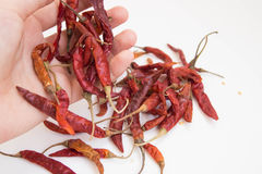 Hand holding Dried chili peppers. On white background Stock Images
