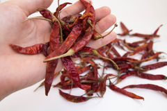 Hand holding Dried chili peppers. On white background Royalty Free Stock Photography