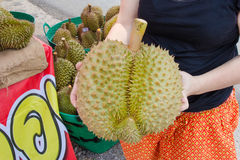 Hand holding Durian Monthong Stock Images