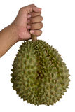 Hand is holding a durian Stock Image