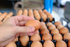 Hand holding eggs from chicken farm on lot of egg in the package. Background. that preserved for sale in wholesale market Royalty Free Stock Images
