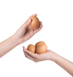 Hand holding eggs over white background Royalty Free Stock Image